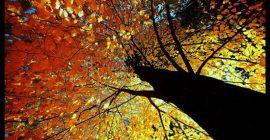 Fall & Letting Go.